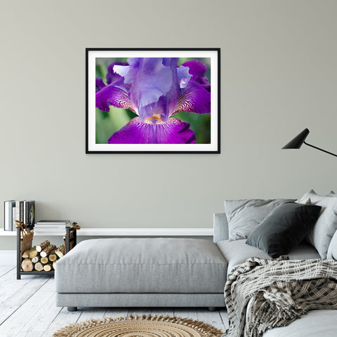 Floral Nature Photograph Glowing Iris - Fine Art Canvas Prints - Home Decor Unframed Wall Art Prints for your living room, bedrooms, dining rooms family rooms and more.