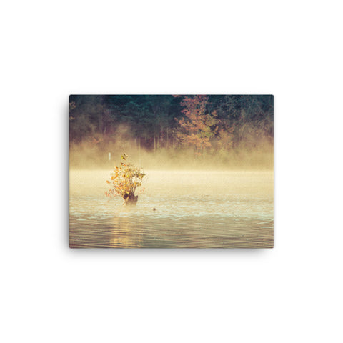 Golden Mist on Waples Pond Rural Landscape Canvas Wall Art Prints