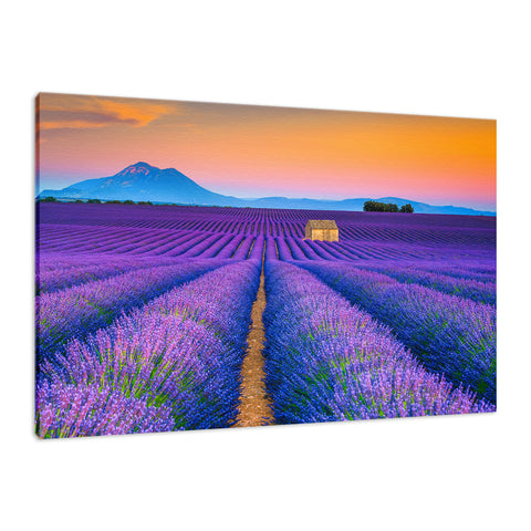 Blooming Lavender Field and Sunset Floral Landscape Wall Art Canvas Prints