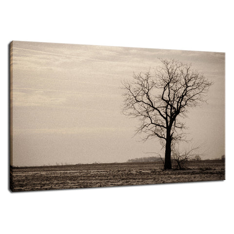 Lonely Tree in Black and White Rural Landscape Photo Fine Art Canvas Wall Art Prints