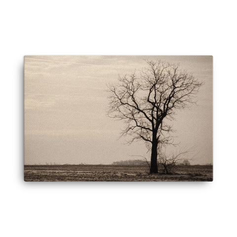 Lonely Tree Abstract Black and White Rural Landscape Canvas Wall Art Prints