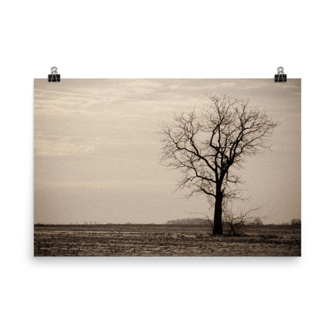 Lonely Tree Landscape Photo Loose Wall Art Prints