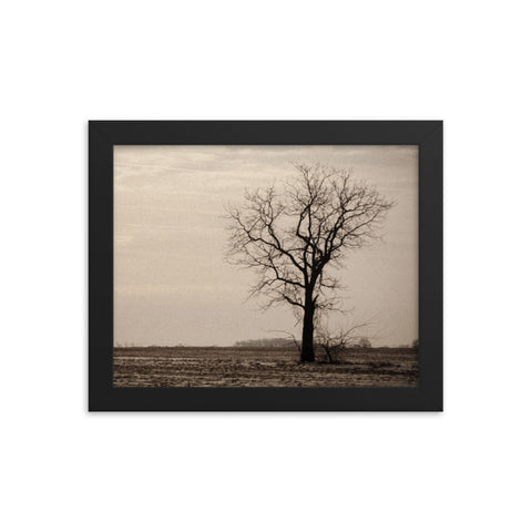Lonely Tree in Black and White Rural Landscape Framed Photo Paper Wall Art Prints
