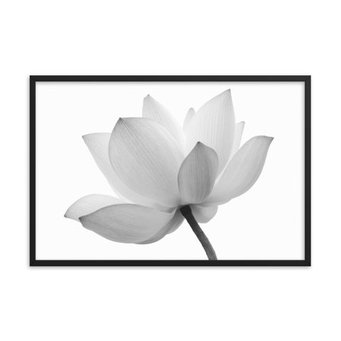Lotus Flower Black and White Effect Floral Nature Photo Framed Wall Art Print