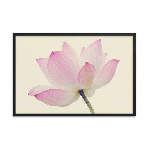 Lotus Flower Creamy Haze Effect Floral Nature Photo Framed Photo Paper Poster