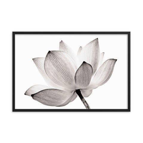 Lotus Flower Tinted Effect Floral Nature Framed Photo Paper Poster