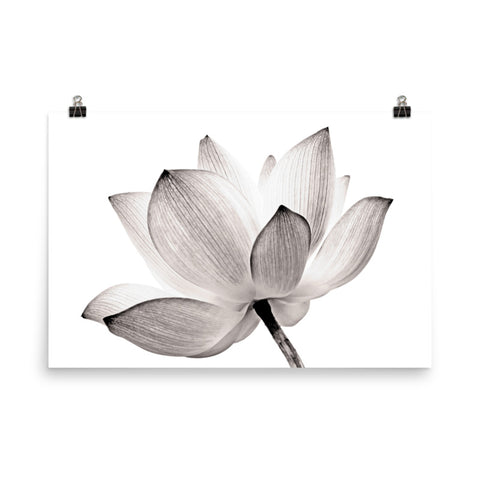 Lotus Flower Tinted Effect Floral Nature Photo Loose Flower Wall Art Print