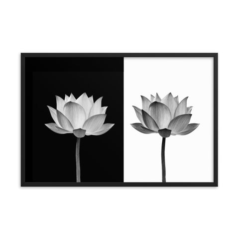 Lotus Flower on Black and White Background Floral Nature Framed Photo Paper Poster
