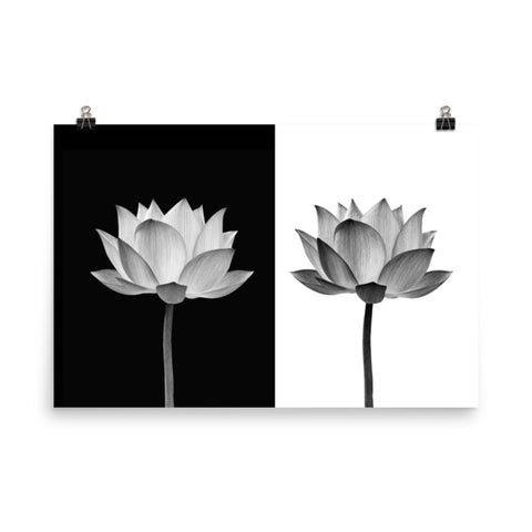 Lotus Flower on Black and White Background Floral Nature Photo Loose Flower Wall Art Print