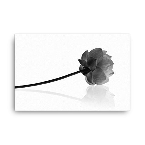 Resting Lotus Flower Black & White Floral Nature Photo Canvas Wall Decorating Art Print