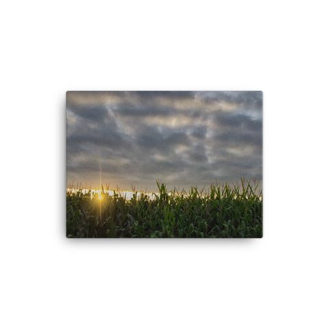 Rows of Corn Rural Landscape Canvas Wall Art Prints