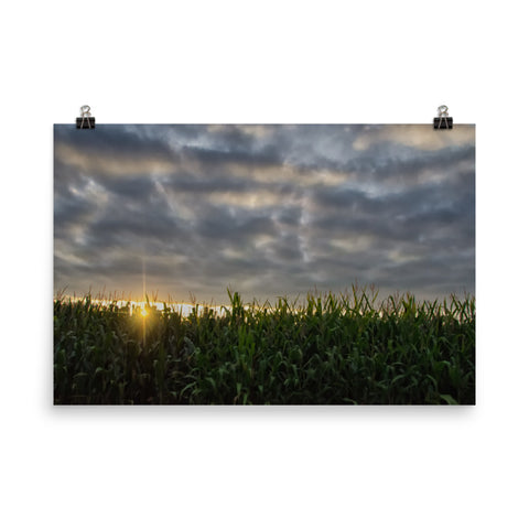 Rows of Corn and Sunset Landscape Photo Loose Wall Art Prints