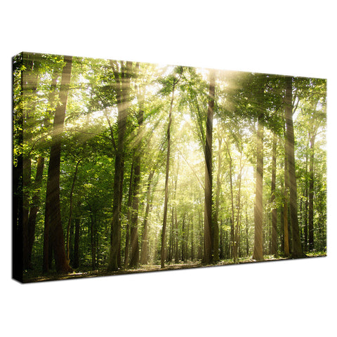Sun Rays Through Treetops in the Forest Fine Art Canvas Wall Art Prints