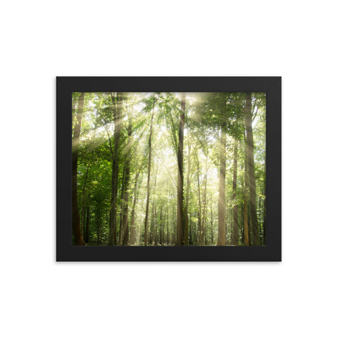 Sun Rays Through Treetops in the Forest Framed Photo Paper Wall Art Prints