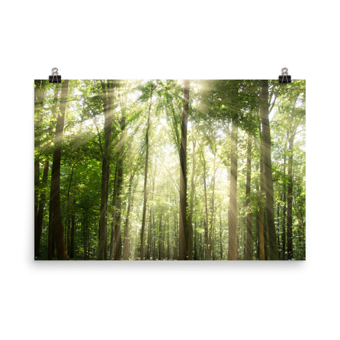 Sun Rays Through Treetops Landscape Photo Loose Wall Art Prints