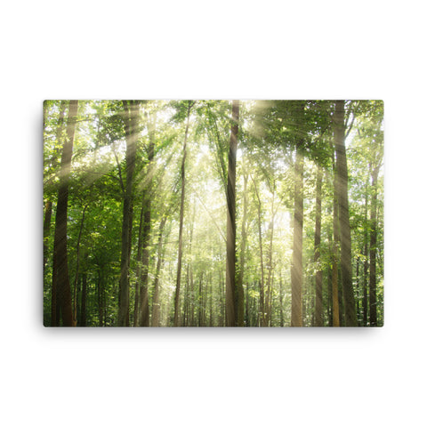 Sun Rays Through Treetops Rural Landscape Canvas Wall Art Prints