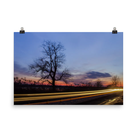 Wicked Tree Landscape Photo Loose Wall Art Prints