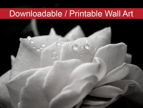 Delicate Rose Floral Nature Photo DIY Wall Decor Instant Download Print - Printable
