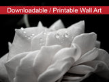 Digital Wall Art, Downloadable Prints, Nature Photography - Delicate Rose with Water Droplets - Black and White - Wall Decor - Printable - PIPAFINEART