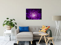 Abstract Flower Nature / Floral Photo Fine Art & Unframed Wall Art Prints - PIPAFINEART