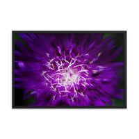 Abstract Flower Floral Nature Photo Framed Wall Art Print  - PIPAFINEART