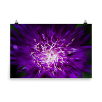 Abstract Flower Floral Nature Photo Loose Wall Art Prints  - PIPAFINEART