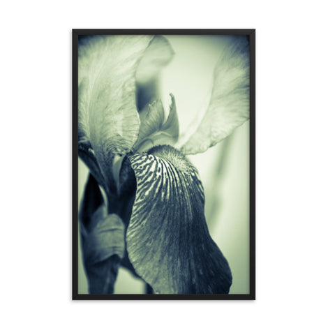 Abstract Japanese Iris Delight Floral Nature Photo Framed Wall Art Print