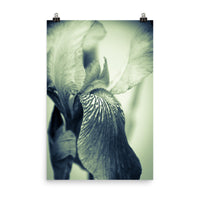 Abstract Japanese Iris Delight Floral Nature Photo Loose Unframed Wall Art Prints  - PIPAFINEART