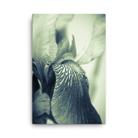 Abstract Japanese Iris Delight Flower Floral Nature Canvas Wall Art Prints