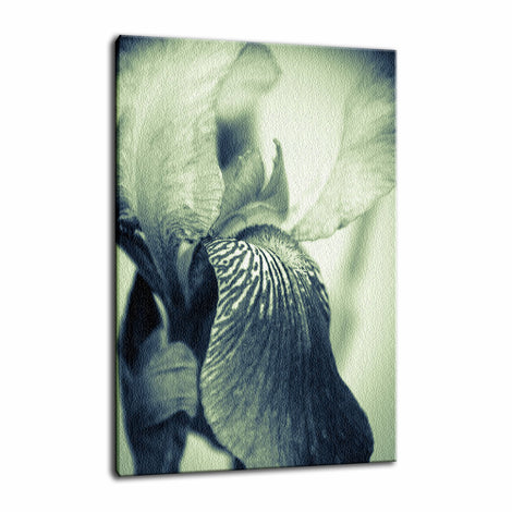 Abstract Japanese Iris Delight Nature / Floral Photo Fine Art Canvas Wall Art Prints
