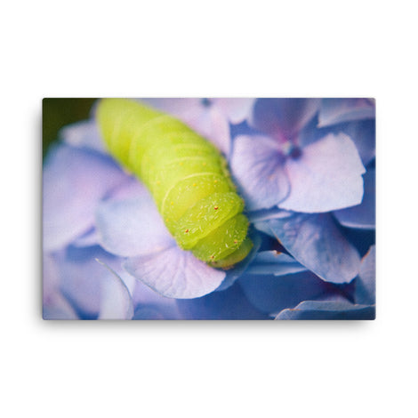Actias Luna Larva on Hydrangea Floral Nature Canvas Wall Art Prints