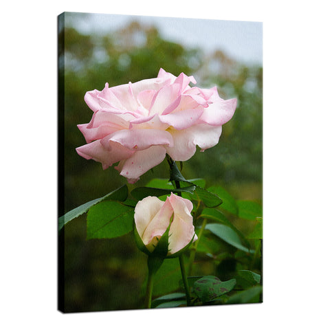 Admiration Nature / Floral Photo Fine Art Canvas Wall Art Prints