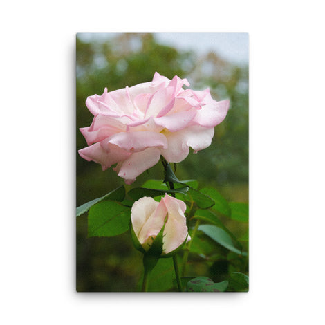 Admiration Pink Rose Floral Nature Canvas Wall Art Prints