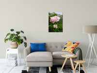 Floral Nature Photograph Admiration - Fine Art Canvas - Home Decor Unframed Wall Art Prints