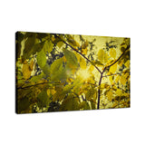 Aged Golden Leaves Botanical / Nature Photo Fine Art Canvas Wall Art Prints  - PIPAFINEART