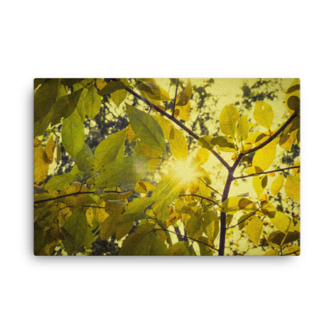 Aged Golden Leaves Botanical Nature Canvas Wall Art Prints