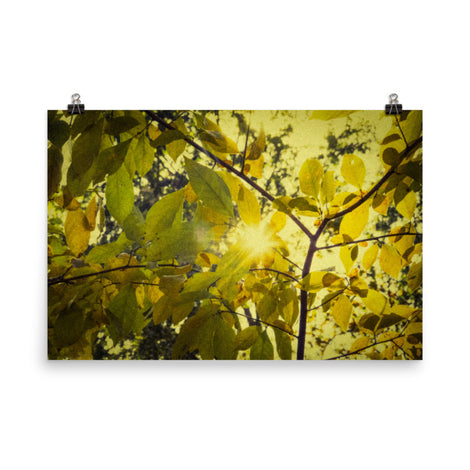 Aged Golden Leaves Botanical Nature Photo Loose Unframed Wall Art Prints