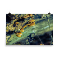 Aged Mushroom Botanical Nature Photo Loose Unframed Wall Art Prints  - PIPAFINEART