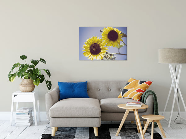 "Aged Sunflowers Against Sky Floral / Nature Fine Art Canvas Wall Art Prints 24"" x 36"" - PIPAFINEART"