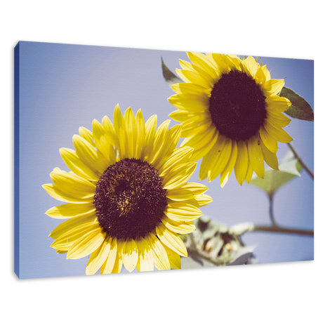 Aged Sunflowers Against Sky Floral / Nature Fine Art Canvas Wall Art Prints