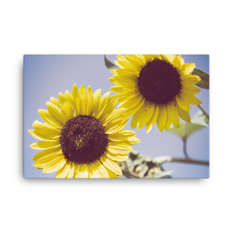 Aged Sunflowers Against Sky Floral Nature Canvas Wall Art Prints