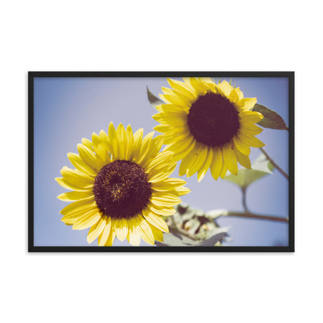 Aged Sunflowers Against Sky Floral Nature Photo Framed Wall Art Print