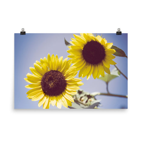 Aged Sunflowers Against Sky Floral Nature Photo Loose Unframed Wall Art Prints