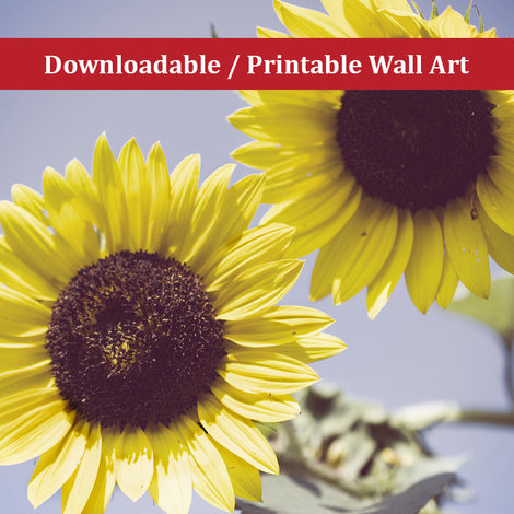 Aged Sunflowers Against Sky Floral Nature Photo DIY Wall Decor Instant Download Print - Printable