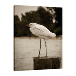 Aged Colorized Snowy Egret on Pillar Wildlife Photo Fine Art Canvas & Unframed Wall Art Prints - PIPAFINEART