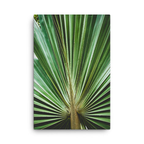 Aged and Colorized Wide Palm Leaves 2 Botanical Nature Canvas Wall Art Prints