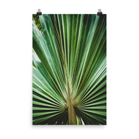 Aged and Colorized Wide Palm Leaves 2 Botanical Nature Photo Loose Unframed Wall Art Prints  - PIPAFINEART