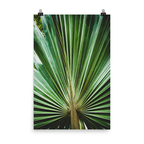 Aged and Colorized Wide Palm Leaves 2 Botanical Nature Photo Loose Unframed Wall Art Prints
