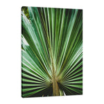 Aged & Colorized Wide Palm Leaves 2 Nature / Botanical Photo Fine Art & Unframed Wall Art Prints - PIPAFINEART