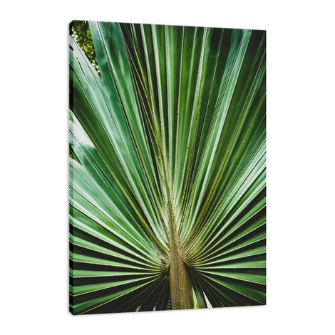 Aged & Colorized Wide Palm Leaves 2 Nature / Botanical Photo Fine Art Canvas Wall Art Prints